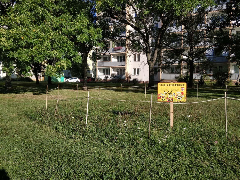 koseny-nekoseny-travnik-september-park-ostredky-ruzinov-zelen-v-meste-pavlech-architekti